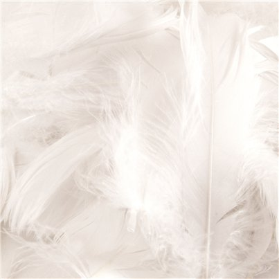 White Decorative Feathers - 50g