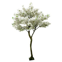 Cream Blossom Tree - 2.7m