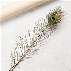 Peacock Feather Decoration - 1.3m