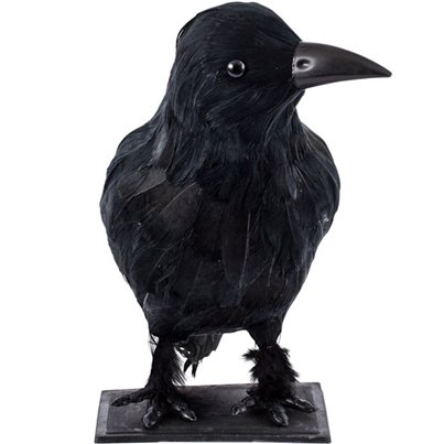 Large Feathered Raven - 23cm