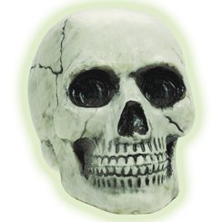 Glow In The Dark Skull - 20cm