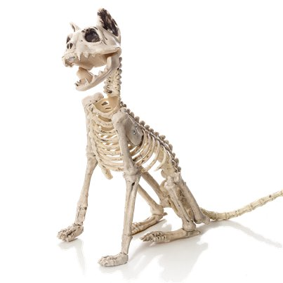 Skeleton Sitting Cat - 48cm
