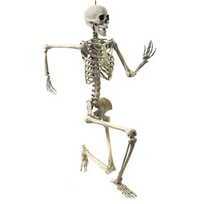 Mr Bones Life Size Skeleton - 1.5m