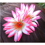 Hair-Clip - Assorted Colours