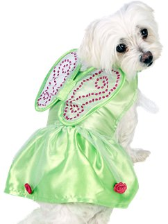 Tinkerbell Dog