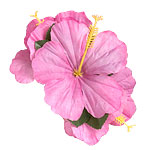 Flower Hair-Clip - Hawaiian Accessories