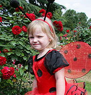 Ladybird - Toddler Costume