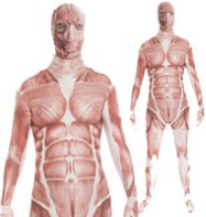 Morphsuit Muscle - Adult Costume Fancy Dress