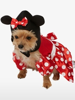 Minnie Mouse Dog