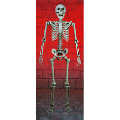 Halloween Realistic Skeleton - 1.6m